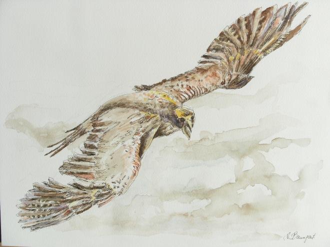 Adler-Lust-zu-fliegen-Nadia-Baumgart-Aquarell