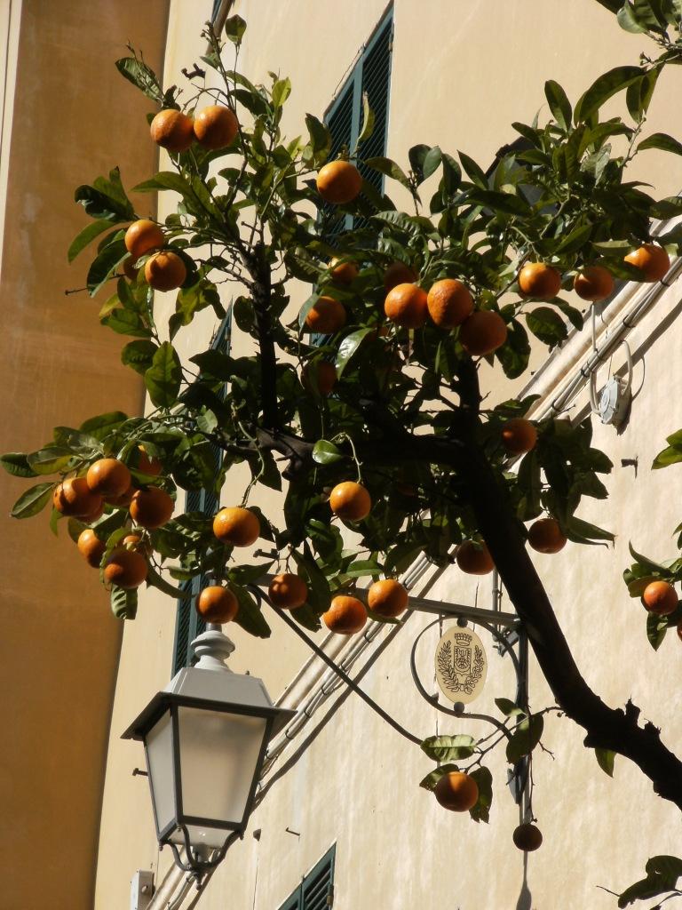 Laigueglia_Orangen