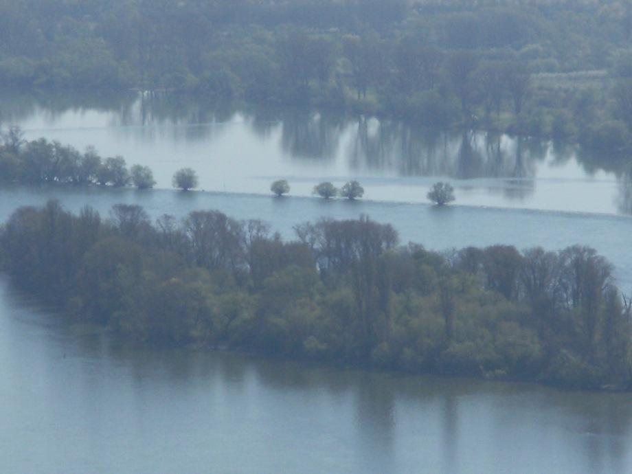 Nebel-Rhein-Nadia-Baumgart