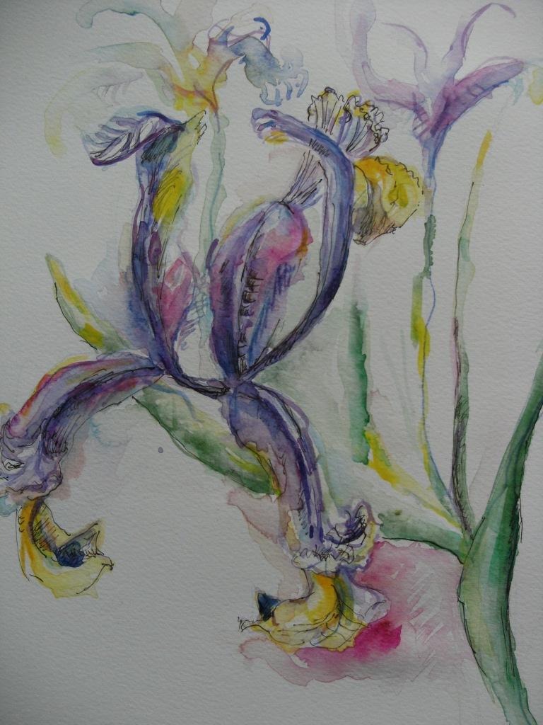 Printemps-Iris-Nadia-Baumgart