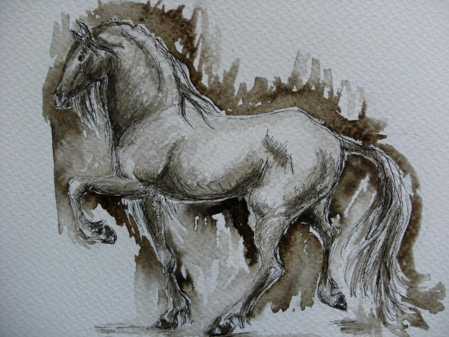 Horse-Drawing-Nadia-Baumgart-Cavallo