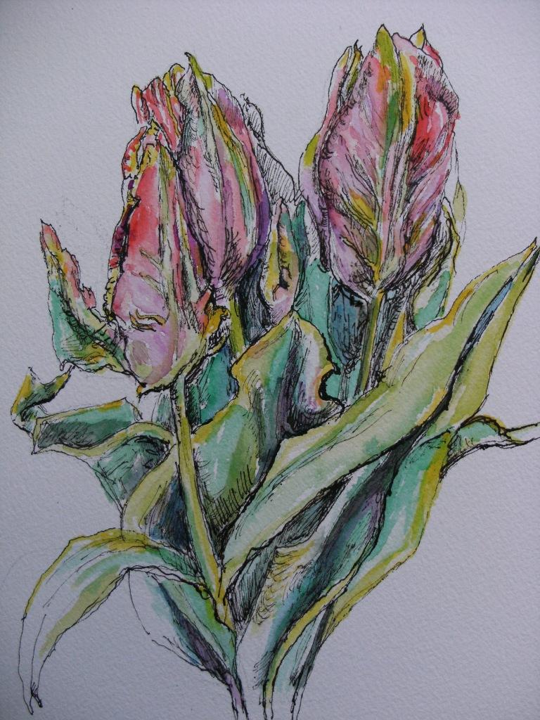 Tulip-Papageientulpe-Zeichnung-Nadia-Baumgart