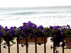 Fleurs-et-mer-Alassio-Nadia-Baumgart