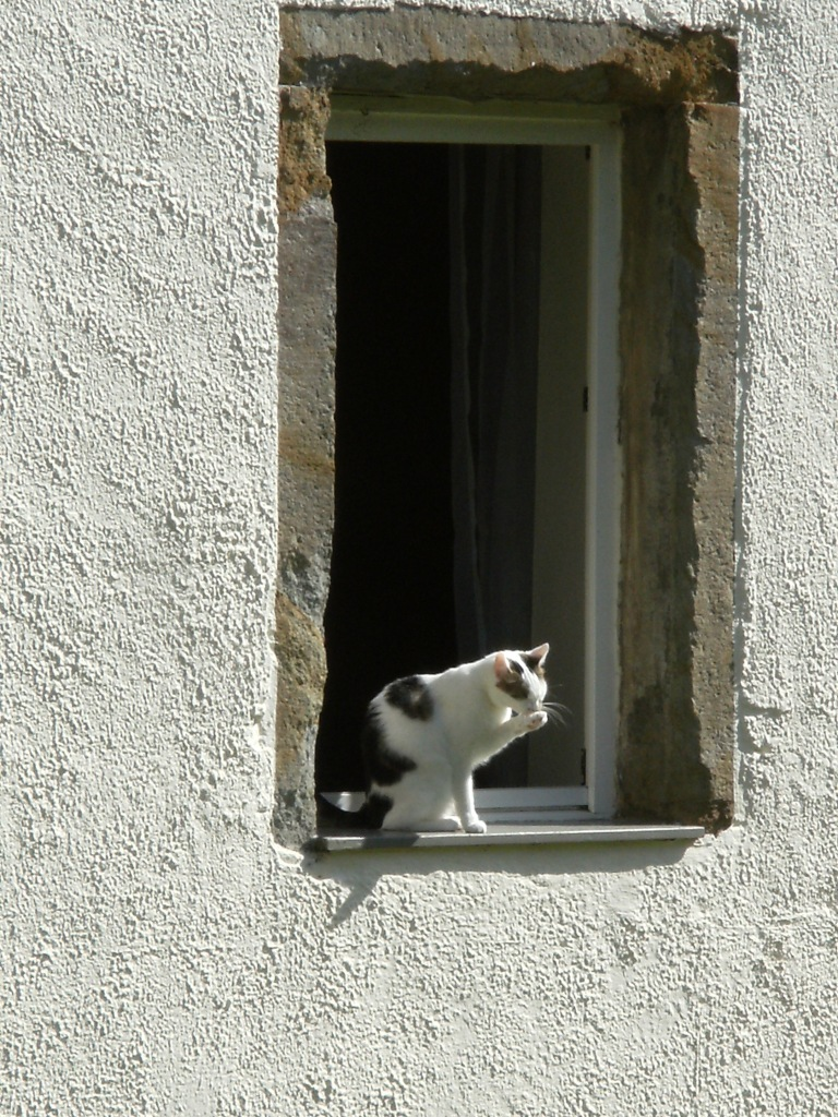 Katze-leckend-Nadia-Baumgart