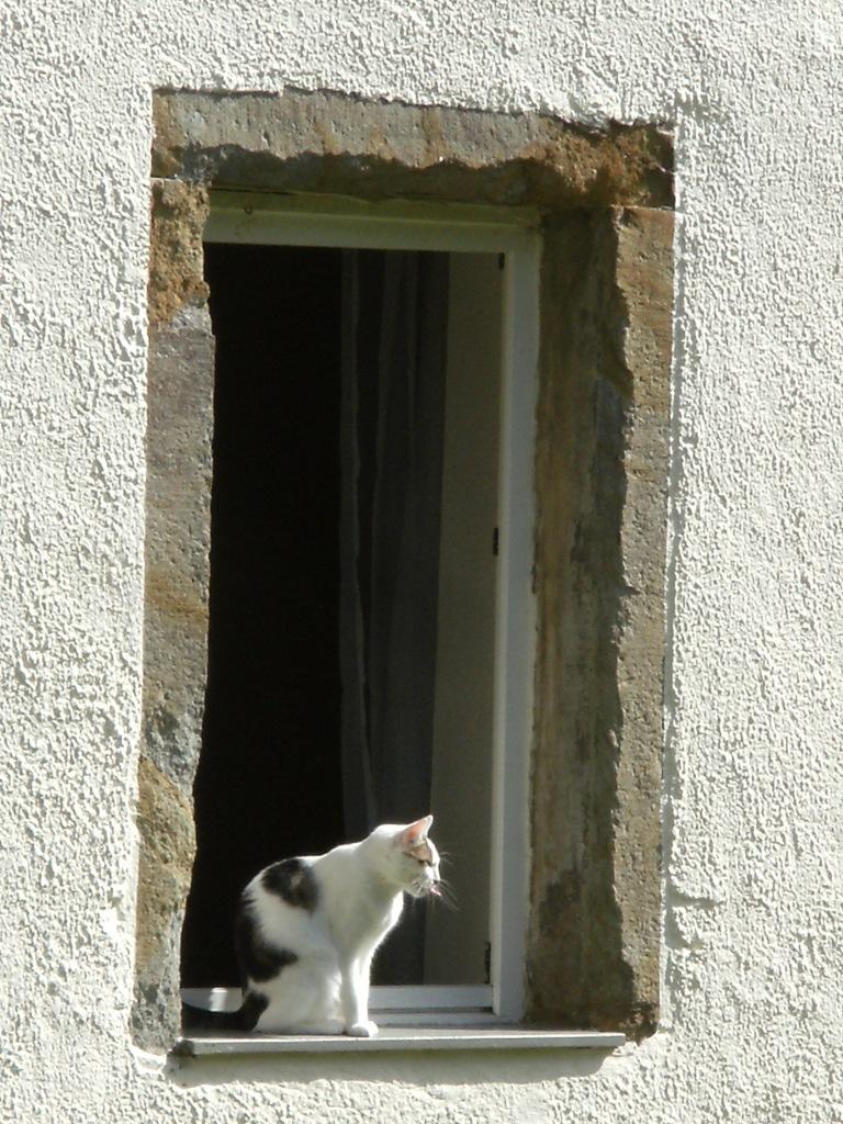Katze-Zunge-Fenster-Nadia-Baumgart