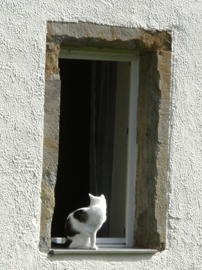 Katze-Nadia-Baumgart