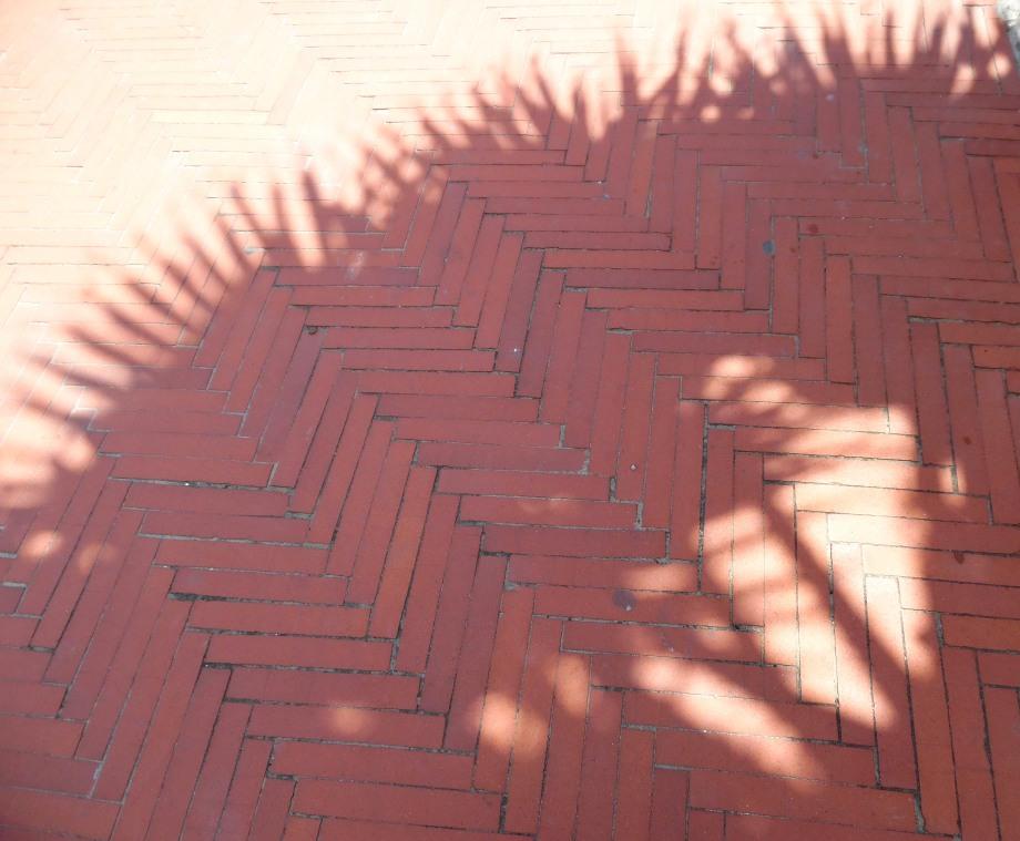 Palmen-Schatten-Laigueglia