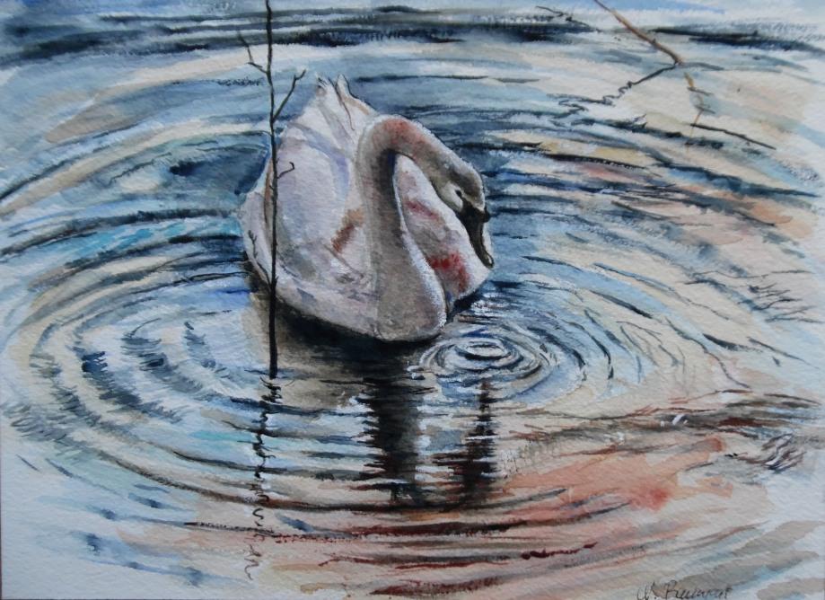 Schwan-Cygne-Swan-Nadia-Baumgart-Aquarell-Watercolour