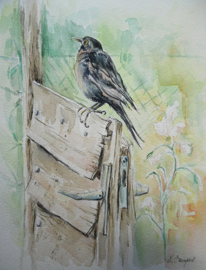 Amsel-Blackbird-Watercolour-Merl-Nadia-Baumgart