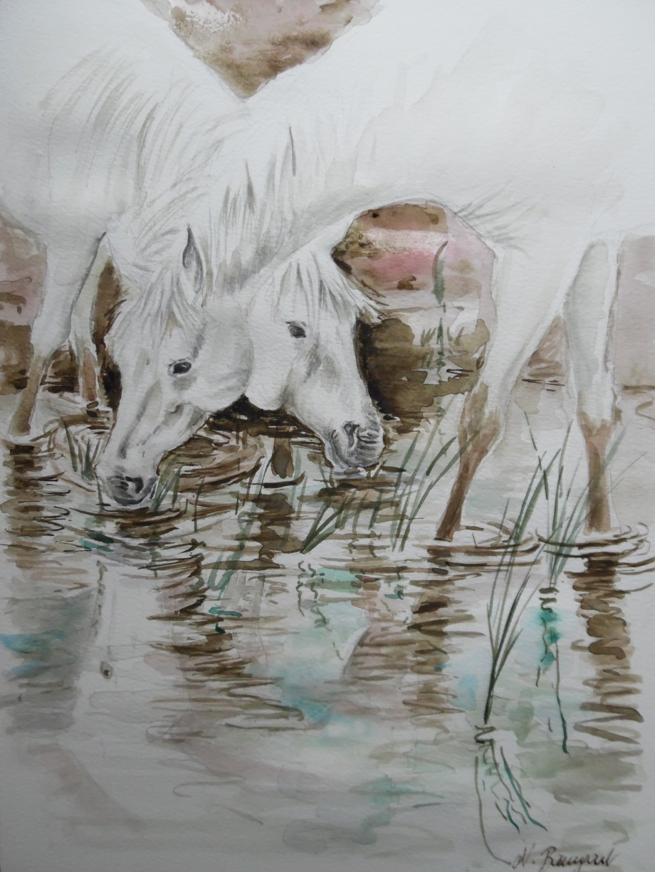 cheval-camargue-marais-aquarelle-white-horses-watercolour-Nadia-Baumgart