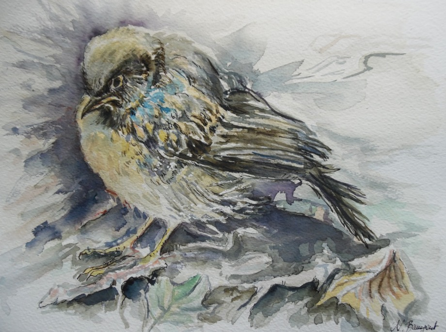 Vogel-Nest-Aquarell-Nadia-Baumgart