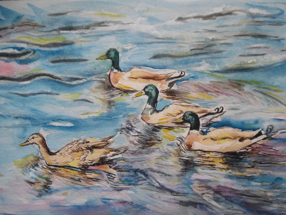 Enten-Canards-Aquarell-Watercolour-Nadia-Baumgart