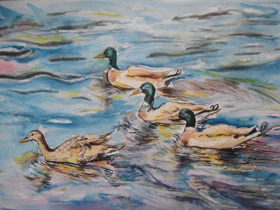 Enten-Canards-Aquarell-Watercolour-Nadia-Baumgart