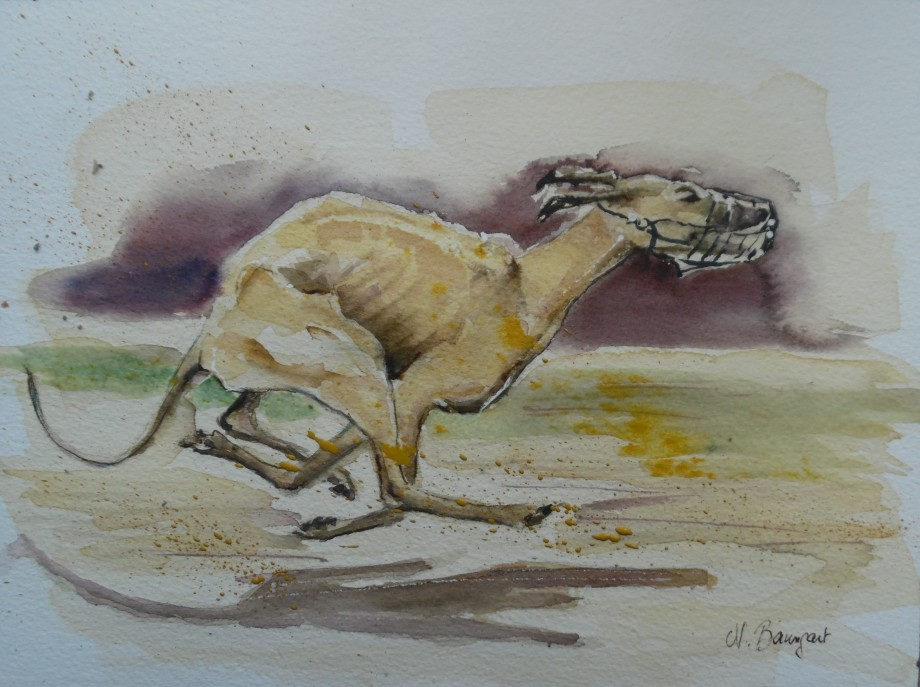 Greyhound-Windhund-Rennen-Aquarell-Watercolor-Nadia-Baumgart