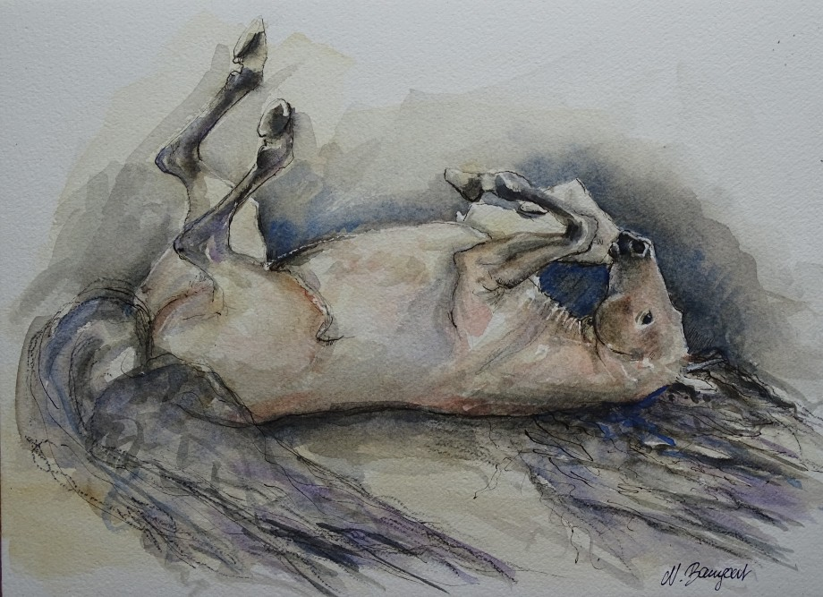sich-wälzendes-pferd-zeichnung-nadia-baumgart