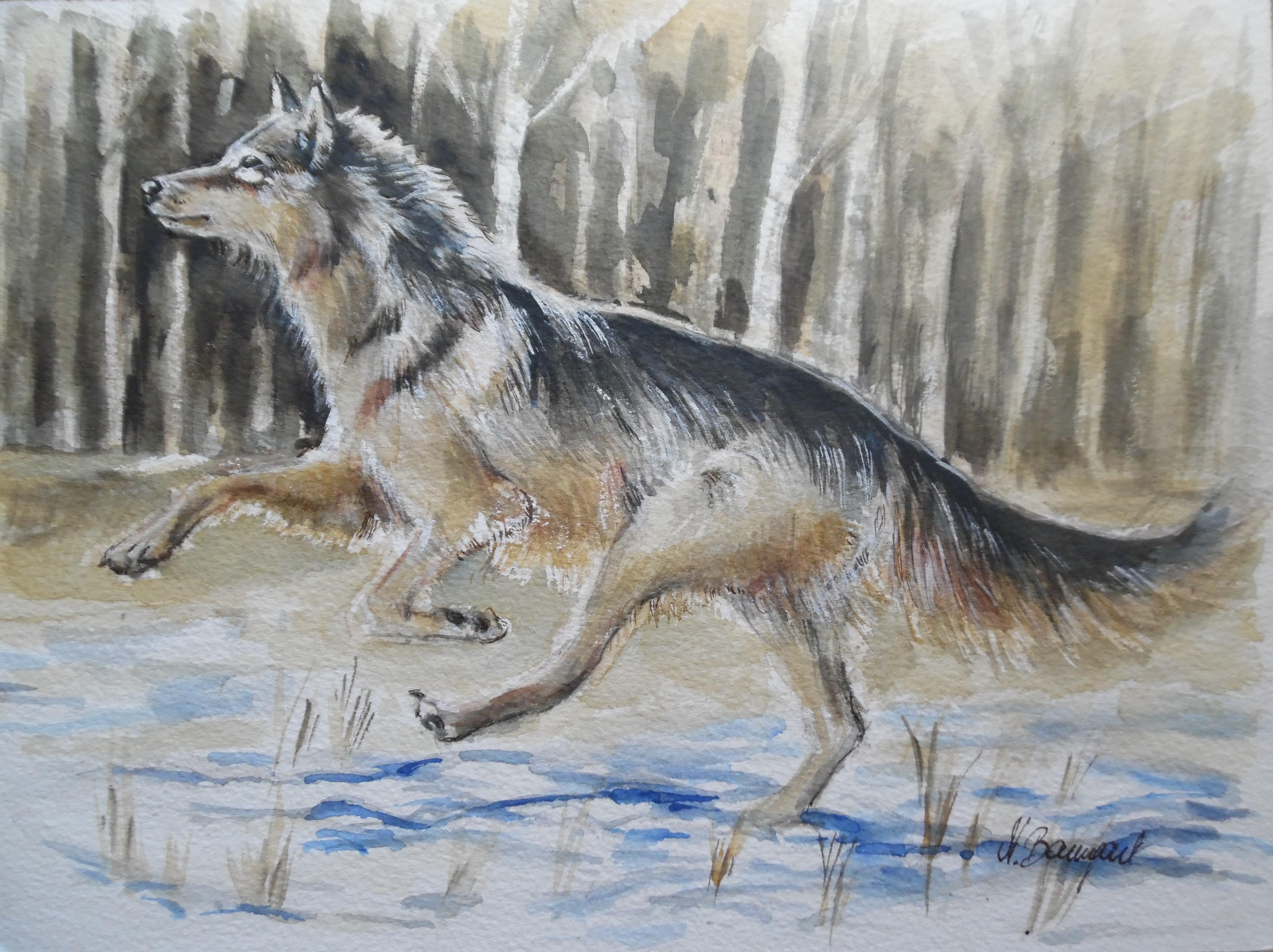 Wolf-Lupo-Auqarell-Watercolour-Nadia-Baumgart