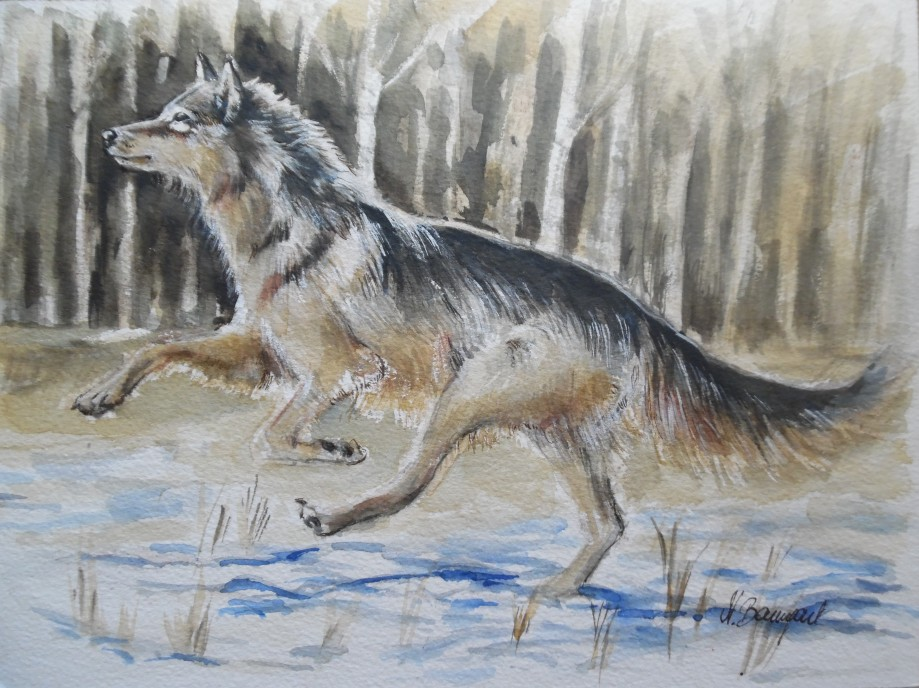 Wolf-Lupo-Auqarell-Watercolour-Nadia-Baumgart