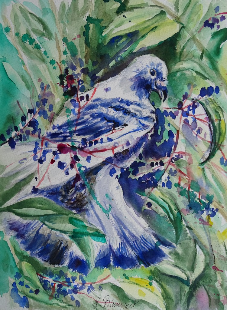 Pigeon-Taube-Nadia-Baumgart-Aquarell