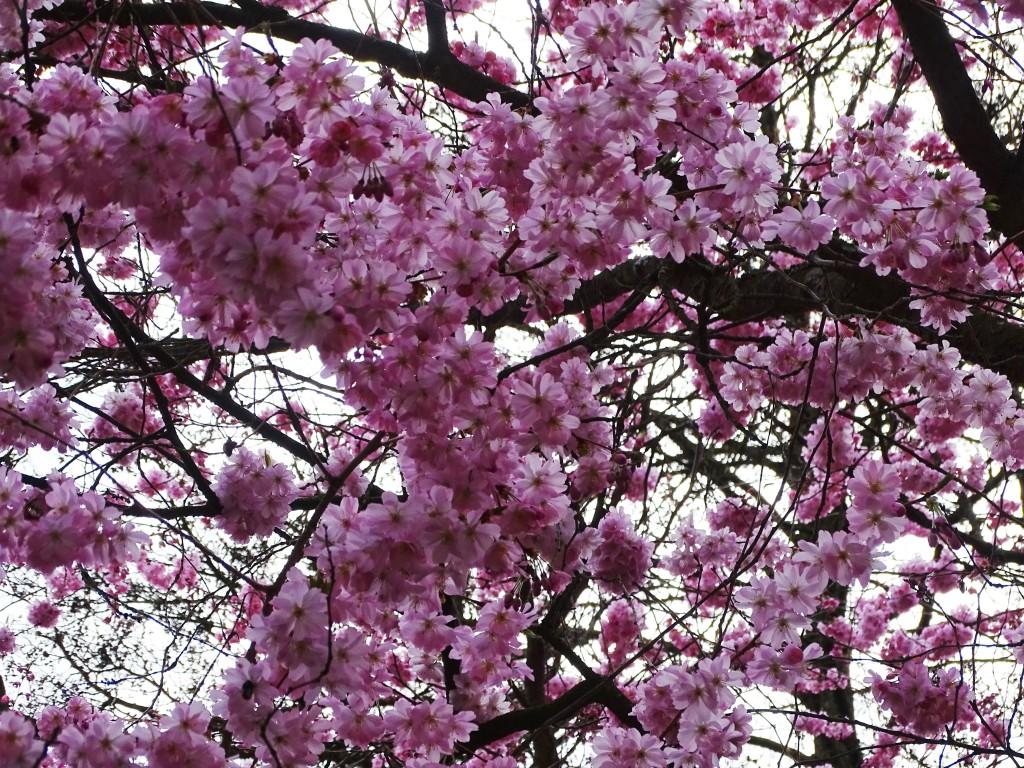 5-Blüten-Foto-Nadia-Baumgart