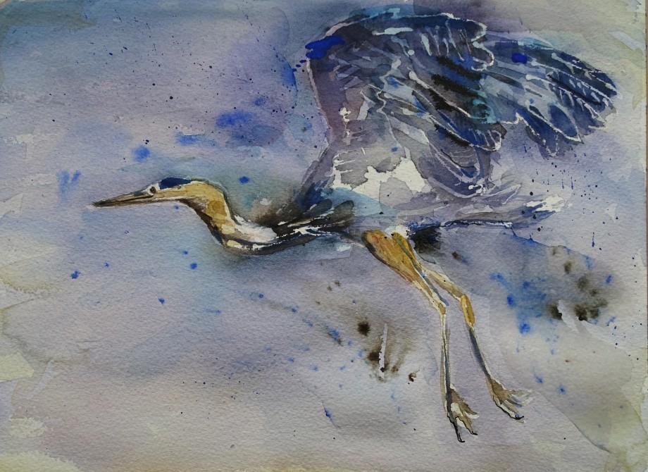 Fliegender-Reiher-Aquarell-Watercolour-Nadia-Baumgart
