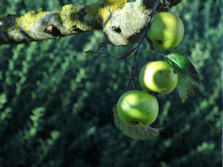Aepfel-Pommes-Nadia Baumgart