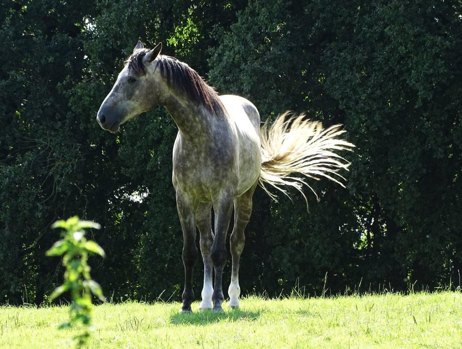 Light-horse-Nadia-Baumgart