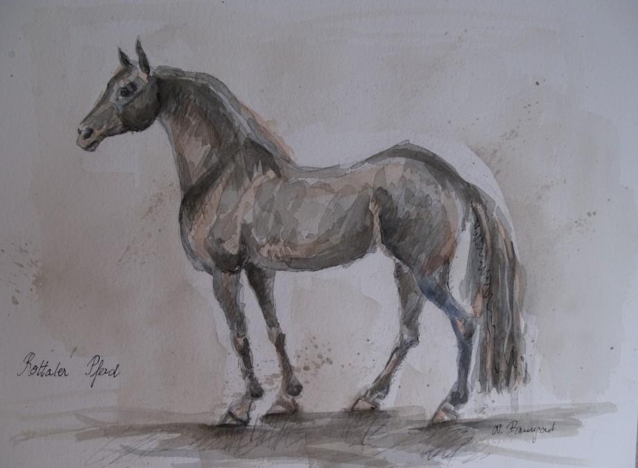 Rottaler-Pferd-Aquarell-Nadia-Baumgart