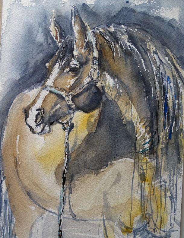 cheval-pferd-aquarell-nadia-baumgart