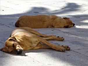 hunde-in-chania