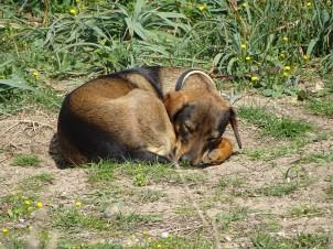 mueder-hund-kreta