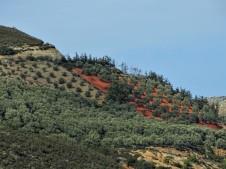 olivenhain-foto-nadia-baumgart