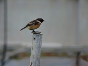 vogel-kreta