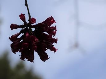 blume-botanischer-garten-kreta-foto-von-nadia-baumgart