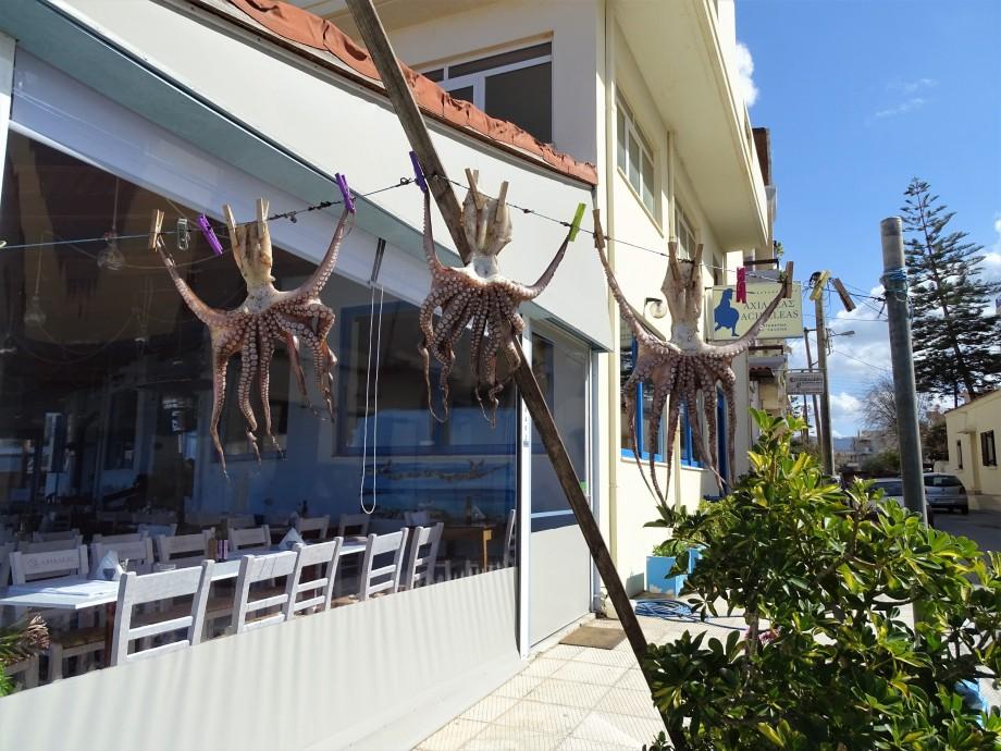 octopus-chania-foto-nadia-baumgart