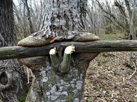 Zaun-und-Baum