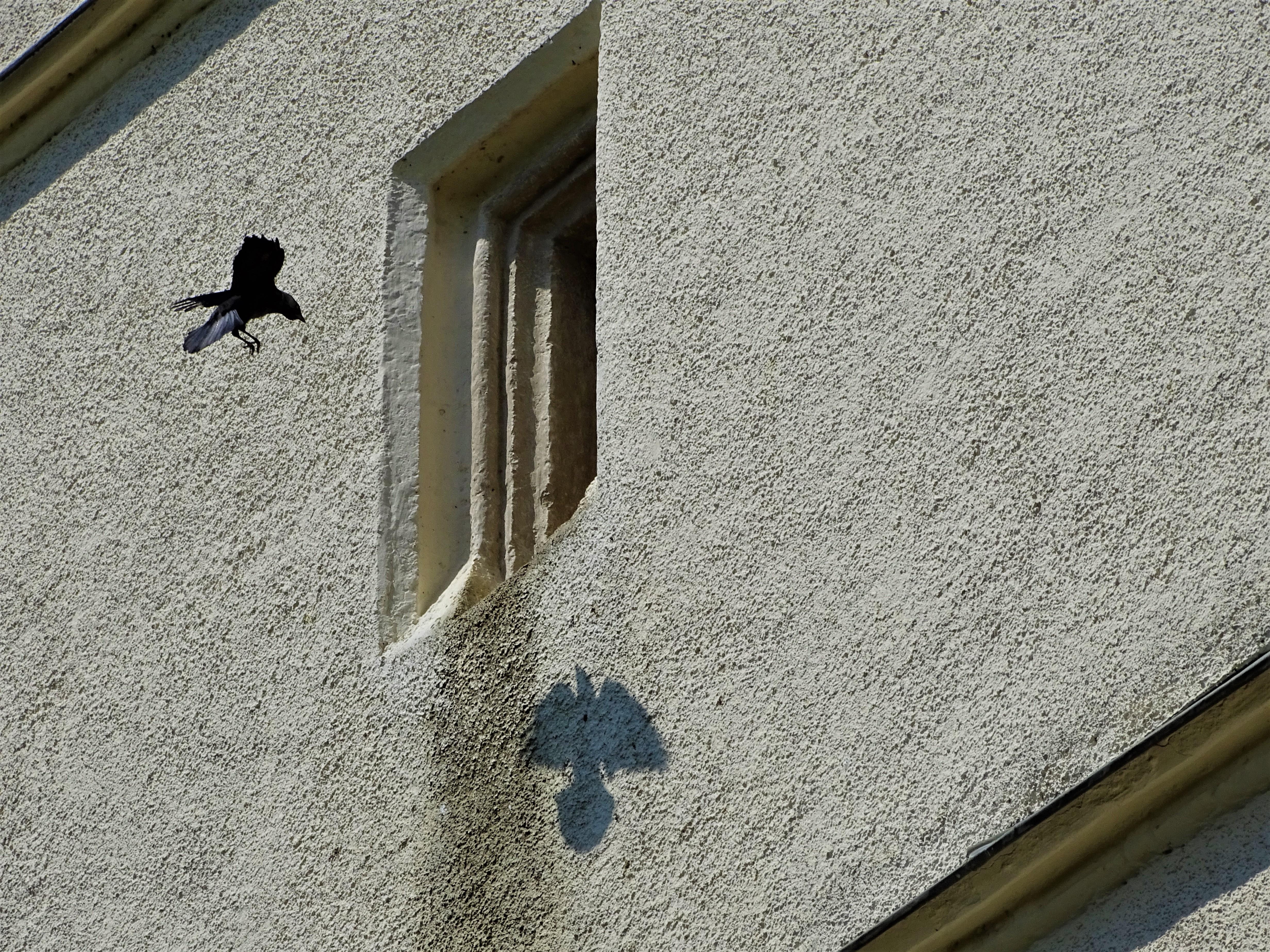 Dohle-Kirchturm-Grongoergen-Foto-Nadia-Baumgart
