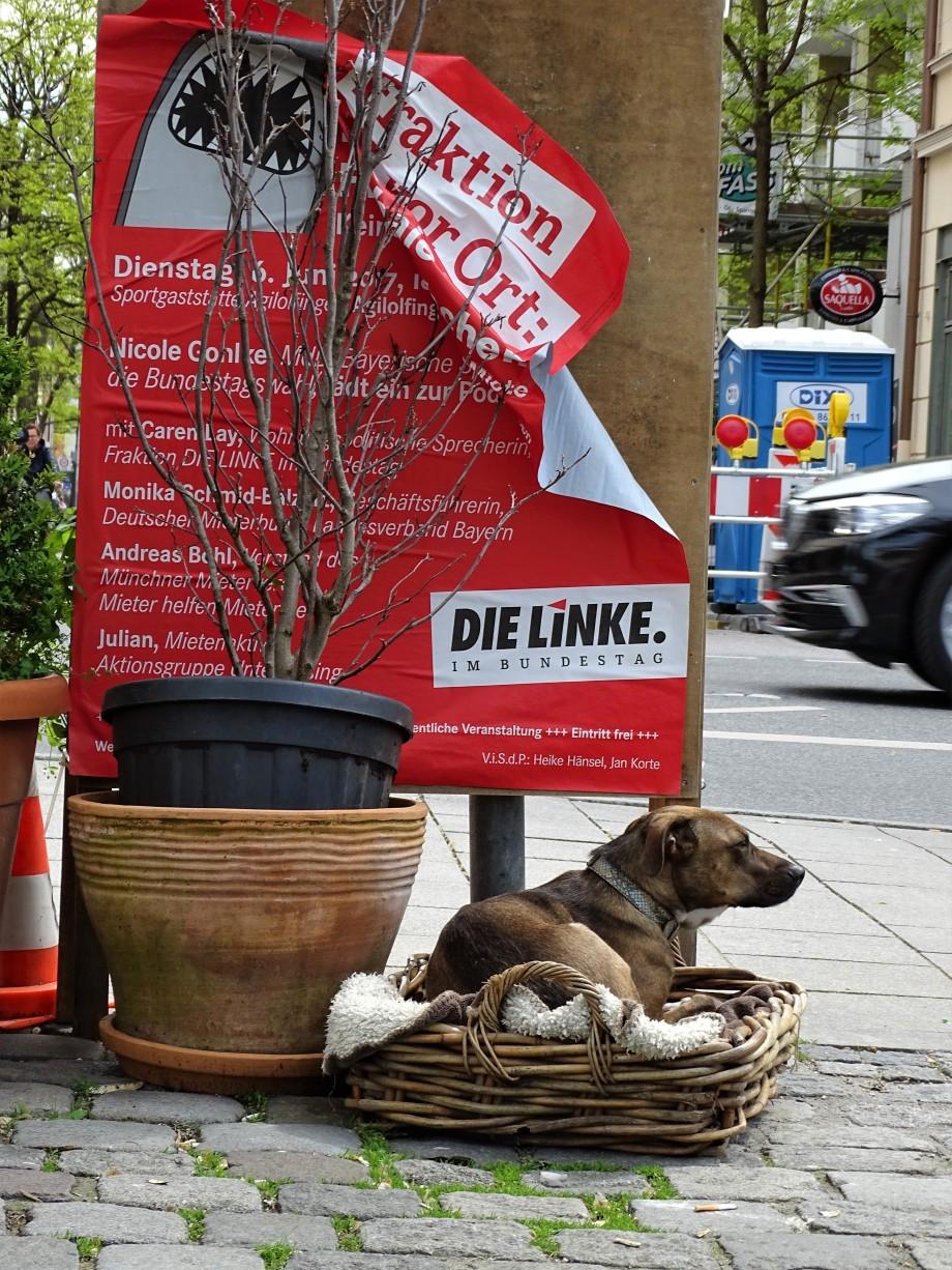 ein-linker-hund-fotos-nadia-baumgart