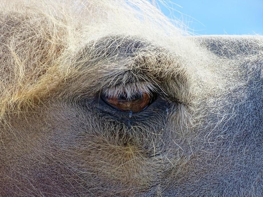 Kamel-Zirkus-Krone