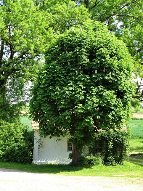 Kleines-Haus-grongoergen-Foto-nadia-Baumgart