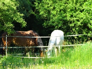 Pferde-Niederbayern-Fotos-Nadia-Baumgart