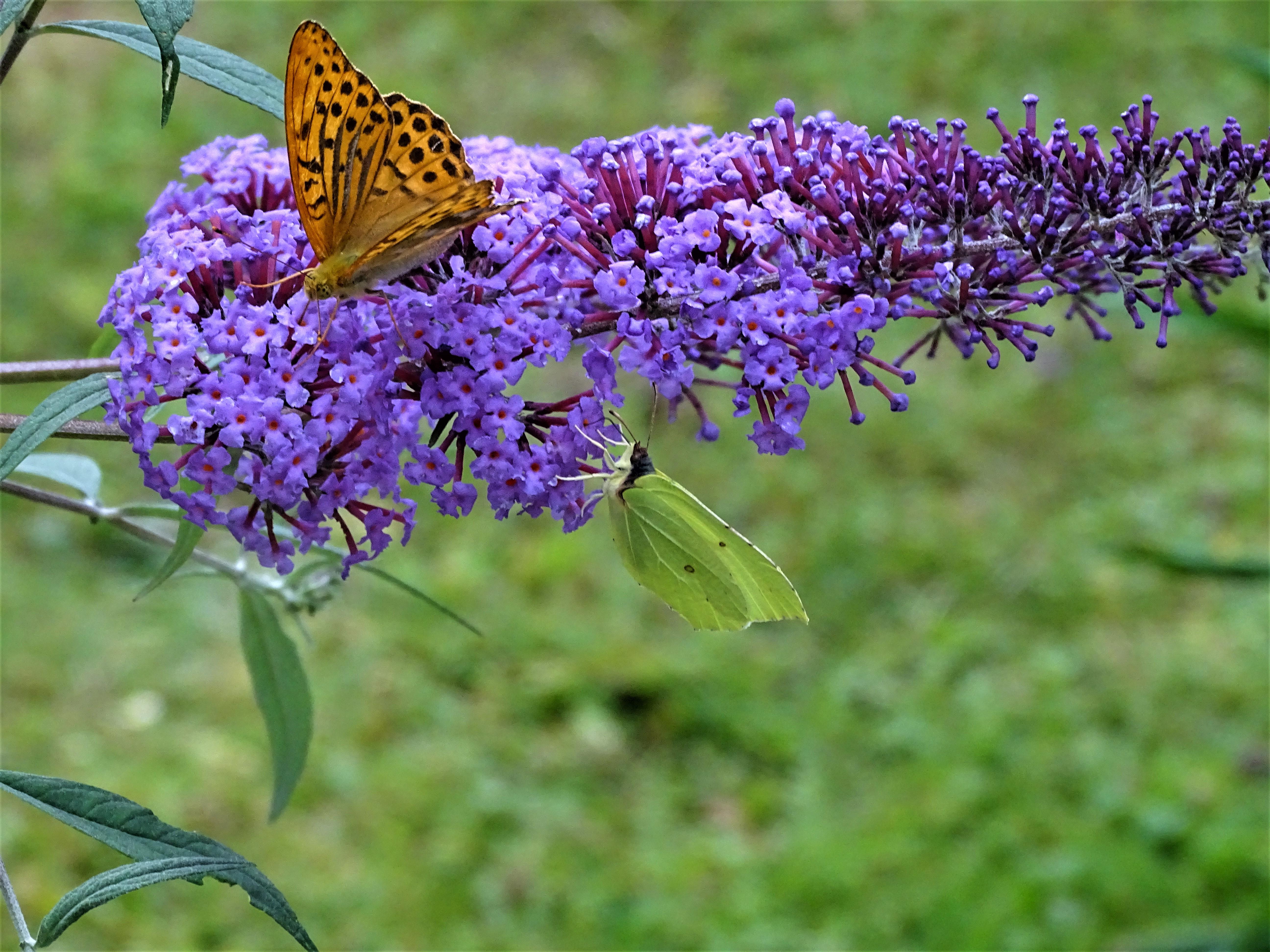 Papillons-Foto-Nadia-Baumgart