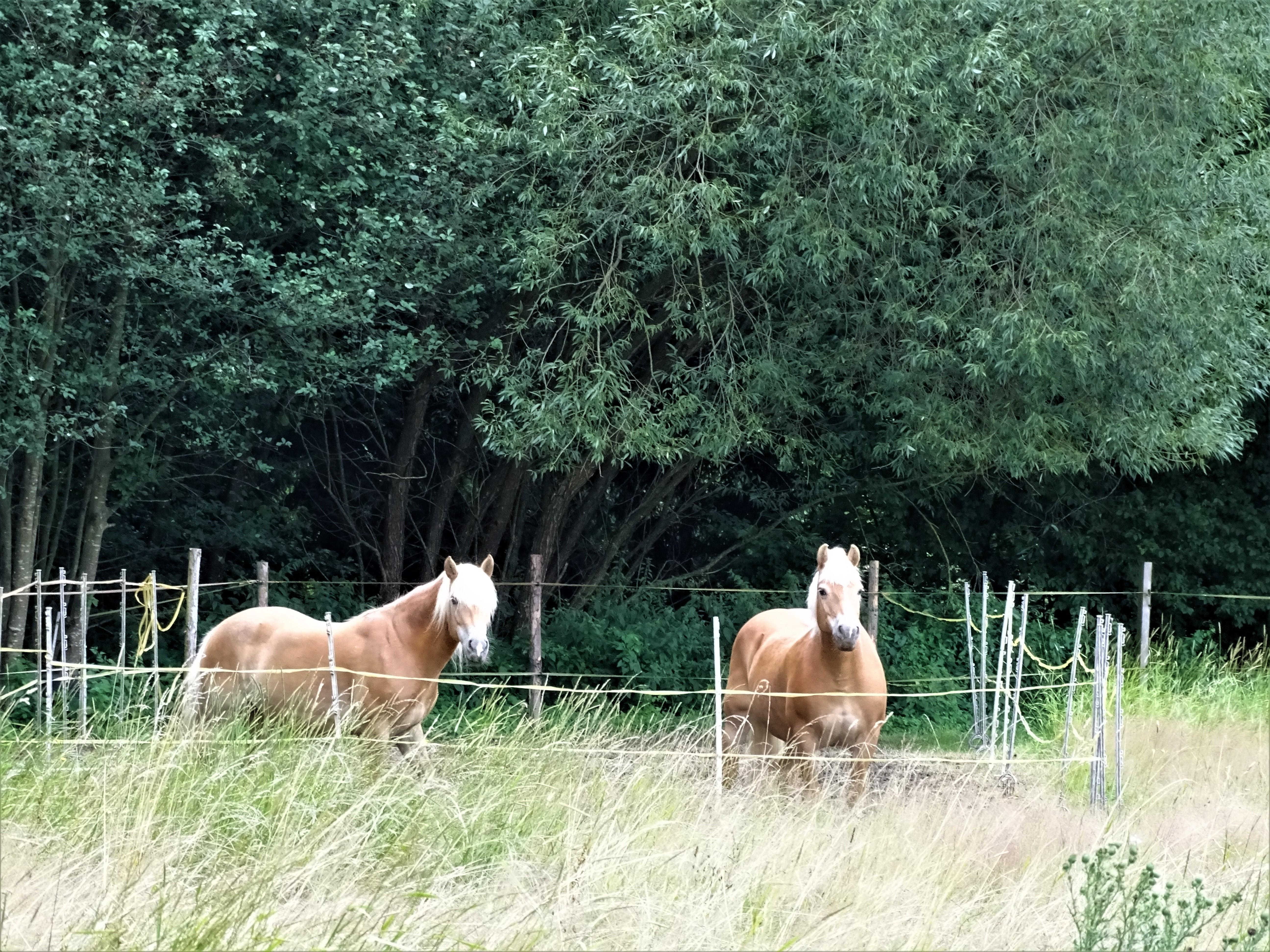 Pferde-Foto-Nadia-Baumgart