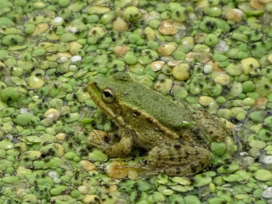 frosch-Foto-Nadia-Baumgart