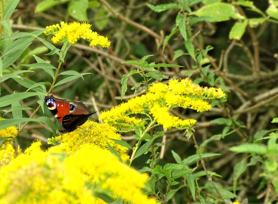 Schmetterling-Foto-Nadia-Baumgart-2