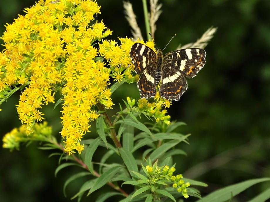 Schmetterling-Foto-Nadia-Baumgart