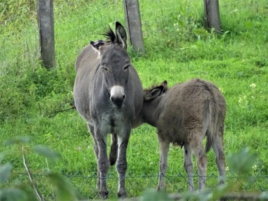 1-Esel-Fotos-Nadia-Baumgart