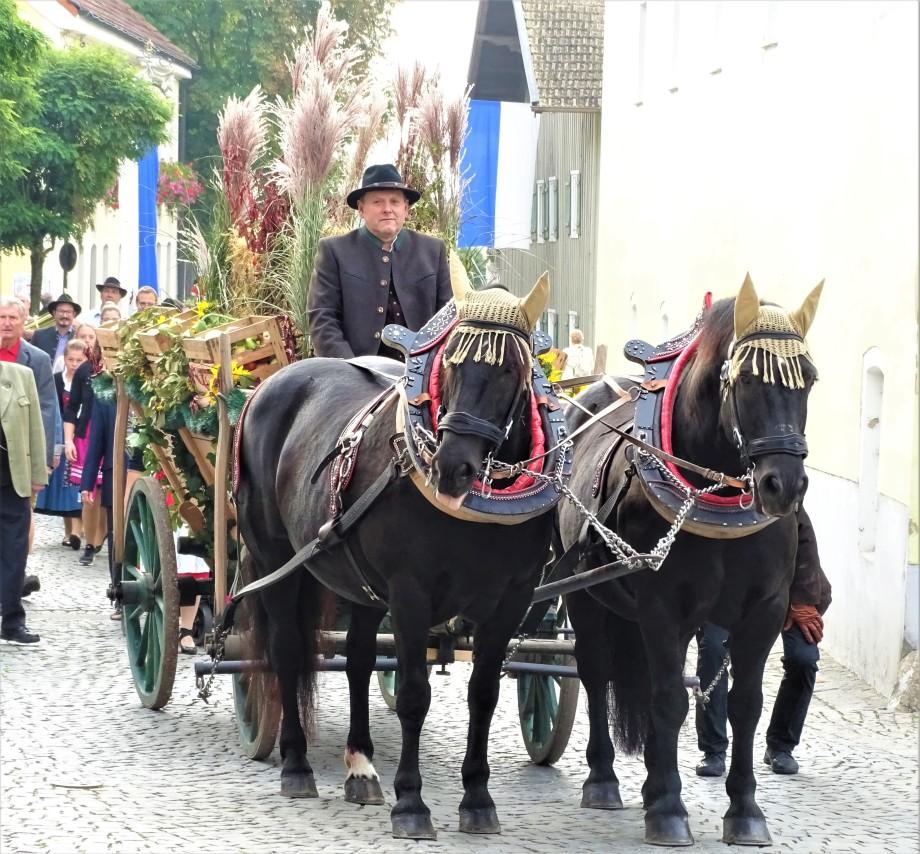 1-Slaski-Pferde-Schlesisches-Warmblut-in-Bad-Birnbach-Foto-Nadia-Baumgart
