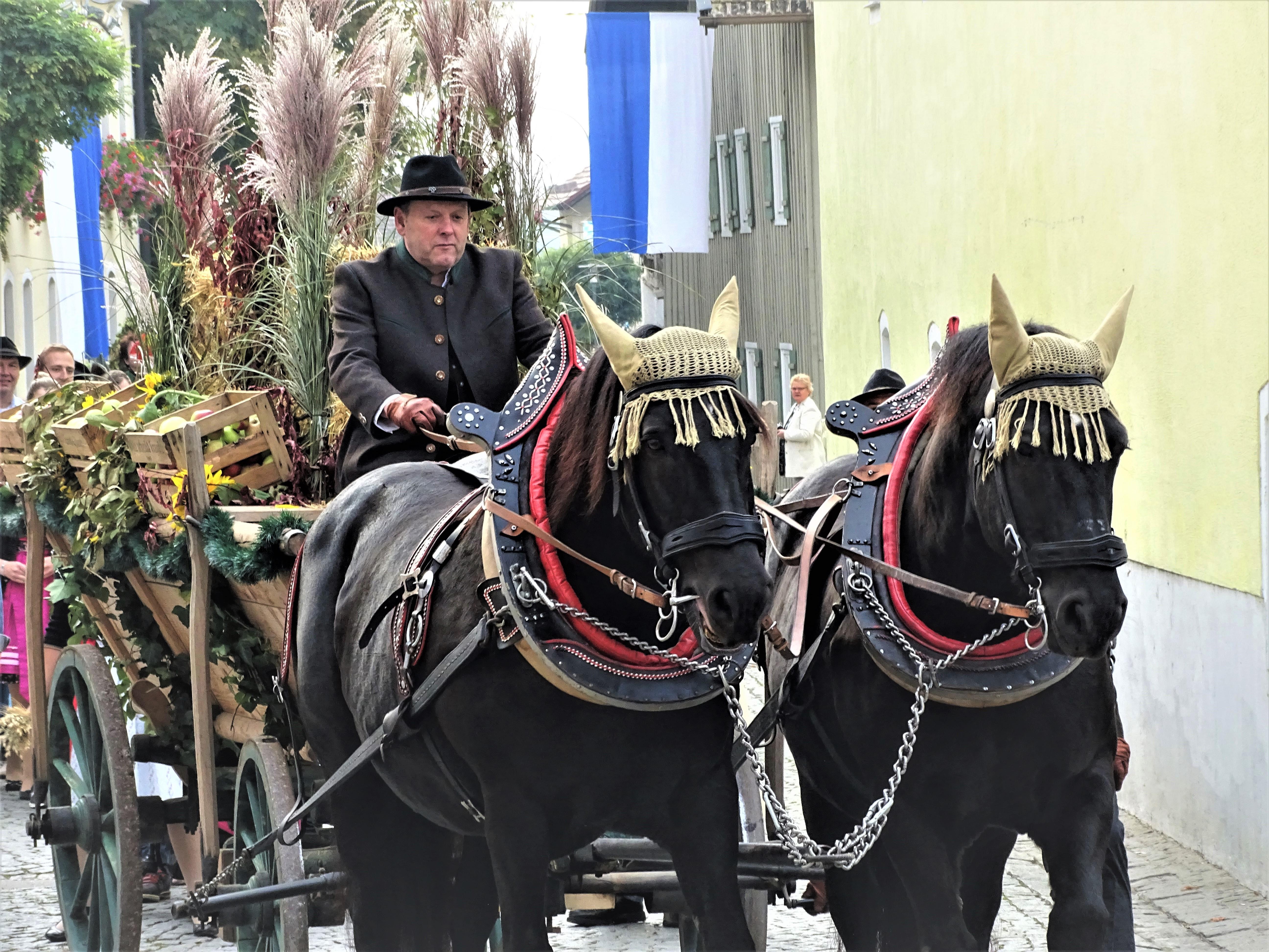 2-Slaski-Pferde-Schlesisches-Warmblut-in-Bad-Birnbach