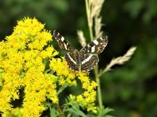 Schmetterling-Foto-Nadia-Baumgart-3