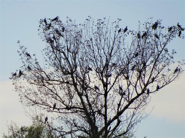 vogelbaum-3